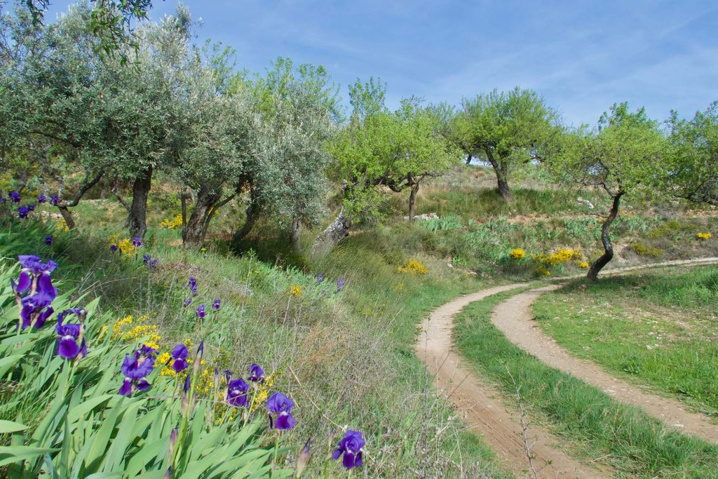 9 Nights the Aragonese Camino Oloron Saint-Marie France to Puente La Reina