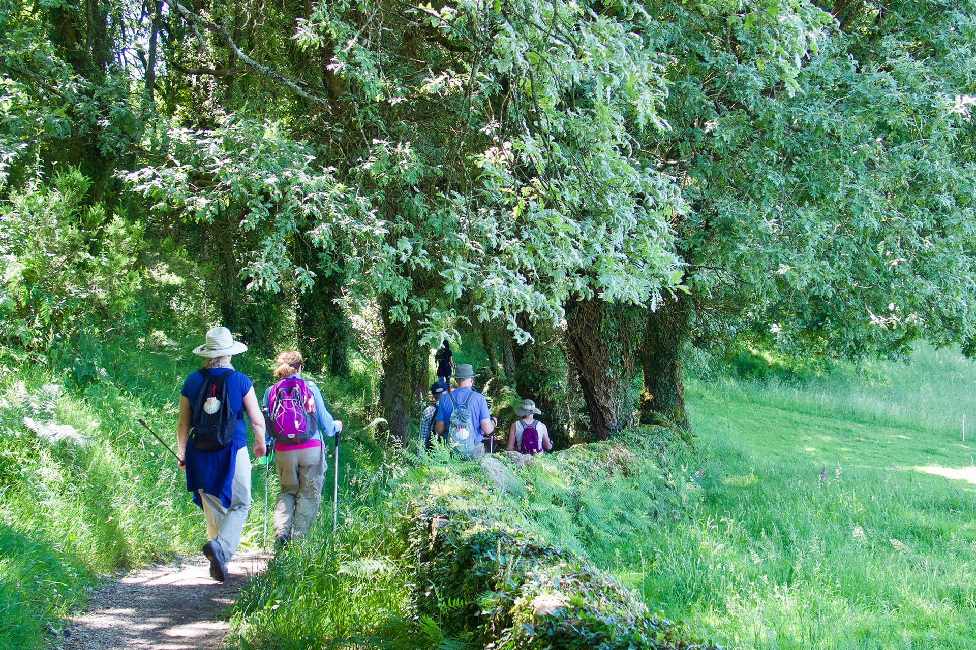Camino de Santiago Primitivo Iberian Adventures