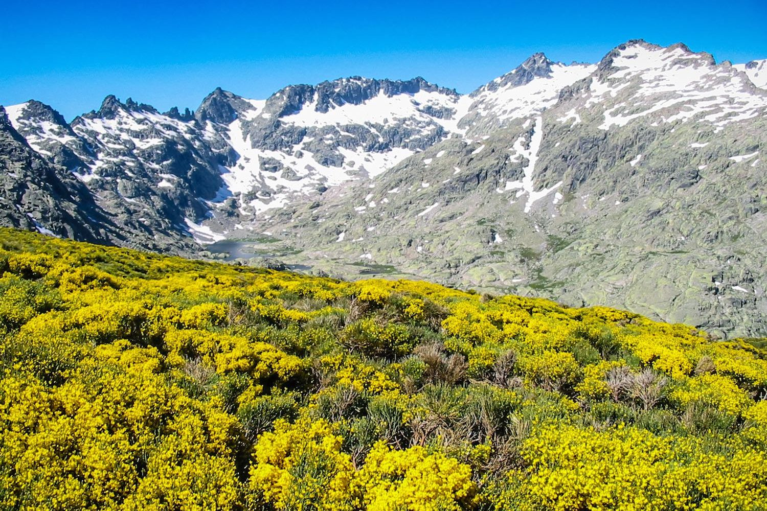 Circo de Gredos with blooming flowers